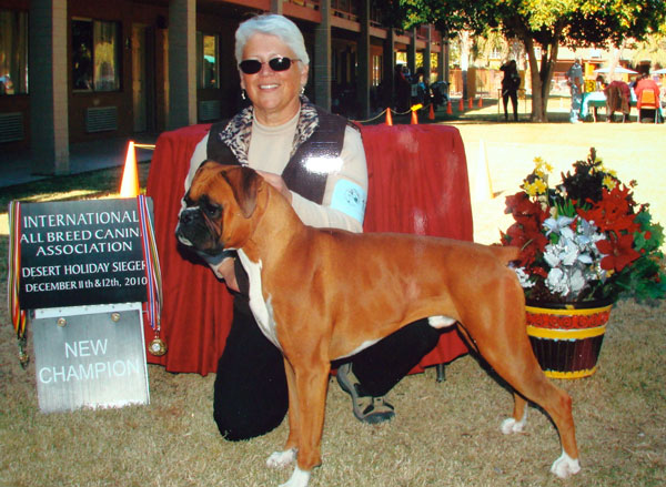 Booker, a Boxer owned by Charlene George winning the International All Breed Canine Association Conformation Trial