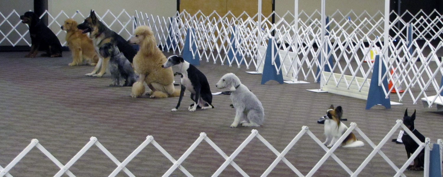 Dogs In Obedience Competitions
